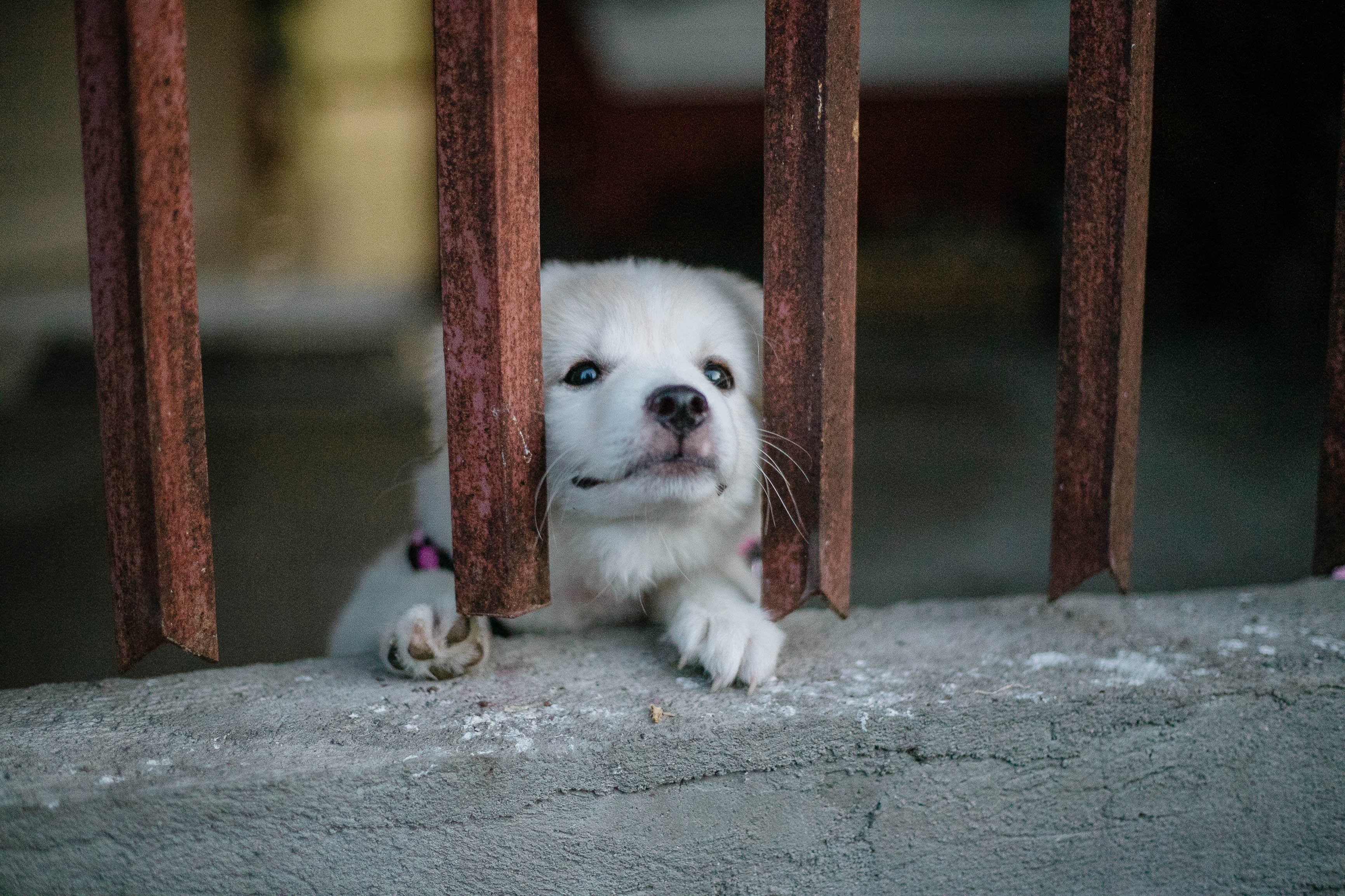 adorable-cage-canine-2306896.jpg