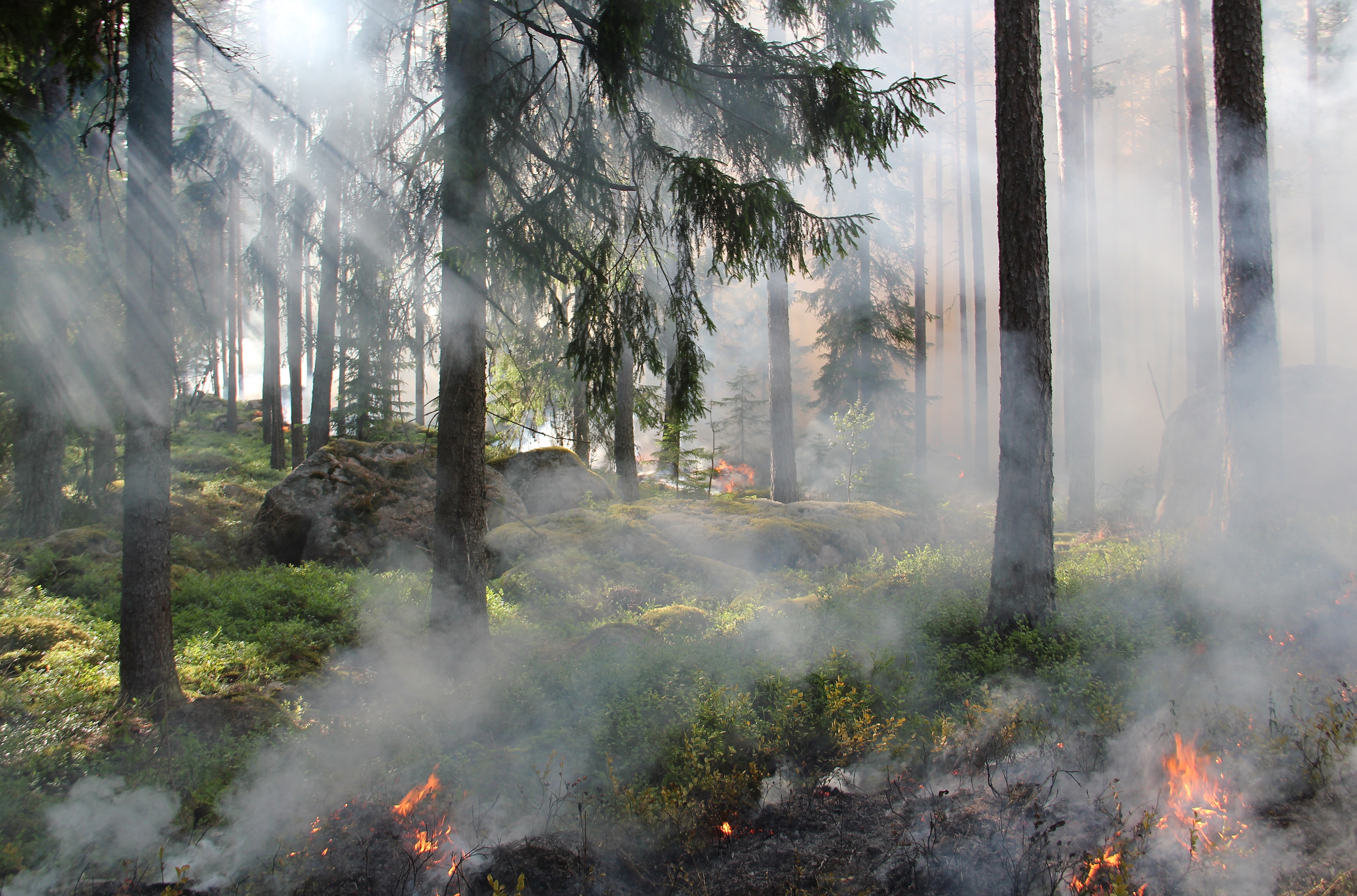 burning-fire-forest-50700.jpg