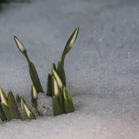Hóvirágnézőben a Malomvölgyben