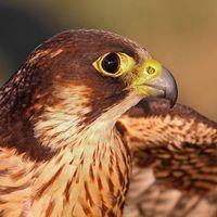 Az év madara 2012