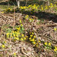 Már nyílnak a völgyben a kerti virágok