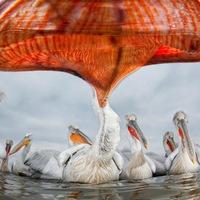 Dél-alföldi sikerek Az Év Természetfotósa 2013 pályázaton