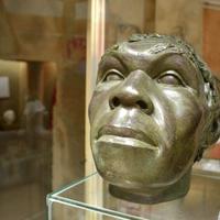 Péniszcsont a múzeumban