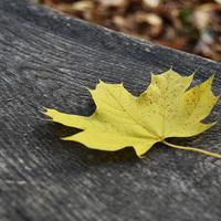TOP8 őszi-téli fotós helyszín Dél-Alföldön