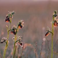 Orchideatúrák a Homokháton