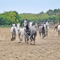 Határtalan lovastúrák