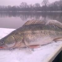 Halak a mélyben, avagy mit csinálnak a Tisza-tó halai a februári hidegben?