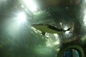 akvárium -TTÖCA.jpg