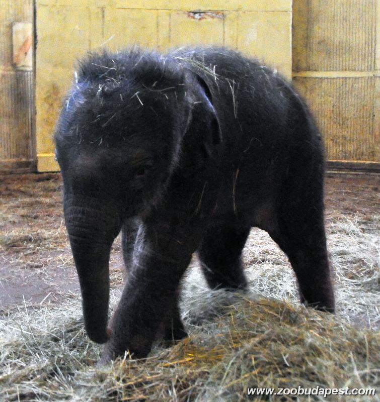 elefant_1361195367.jpg_755x800