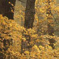 Avartaposó túra a színpompás őszi Gemenci erdőben