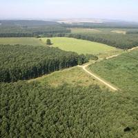 Tolnai erdők ölelésében: Gyulaj