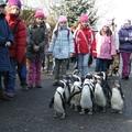 Kis állatkert, nagy élmény! - séta a pingvinekkel