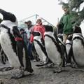 Lépés indulj! - Menetelj pingvinekkel!