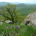 Kóstolj bele a tavaszba Észak-Magyarországon!