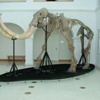 Új természettudományi kiállítás a Mátra Múzeumben
