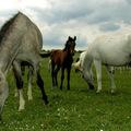 Pisztráng, ló, fátyol - Szilvásvárad 2013-ban is izgalmasnak ígérkezik