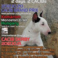 Nemzetközi kutyakiállítás a Monostori erődben