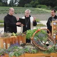 Szent Márton, levendula és bor