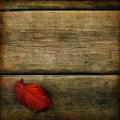 Őszi magány
