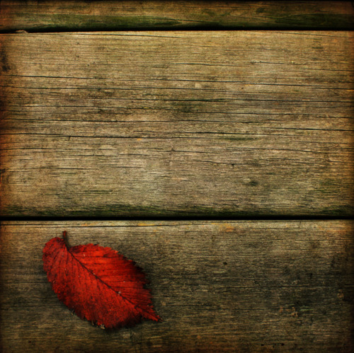 autumn-fall-leaf-lonely-orange-red-Favim.com-91219_large.jpg