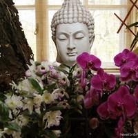 Thaiföld csodálatos orchideái - kiállítás a Mezőgazdasági Múzeumban