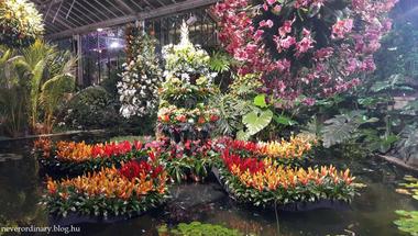 London Calling 13: Azok a csodálatos orchideák