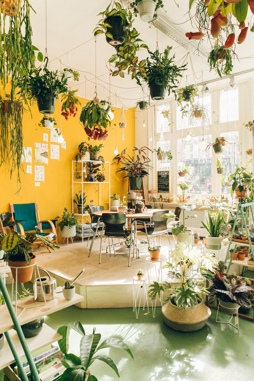 a_plant_shop_called_wildernis_in_amsterdam-.jpg
