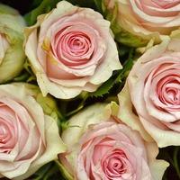 Csodálatos rózsavíz!