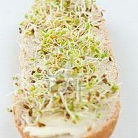 Tippek otthoni csíráztatáshoz + házi túrókrém brokkolicsírával + kukoricacsíra-olajjal