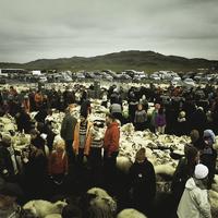 Birkagyűjtés ünnepe Izlandon - a híres Réttir