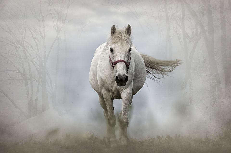 horse-1864334_960_720.jpg