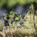 A borászatban csak akkor van fejlődés, ha mindenkor a legjobbra törekszünk