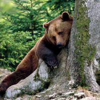Medve támadás - de melyik lehetett a bűnös?