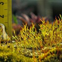 Mohák földjén - makróvilág
