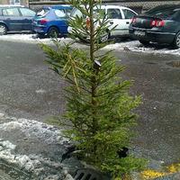 Karácsonyfa a kátyúban
