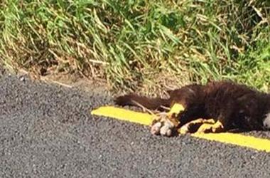 Ráfestették a döglött macskára az útburkolati jelet