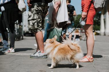 Kutyák a városban. Nézegess négylábú járókelőket!