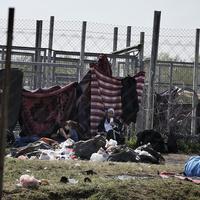 Nyakunkon a kötelezettségszegési eljárás menekültügyben?