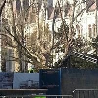 A Fidesz és a fák