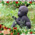 Unod az elcsépelt karácsonyi meglepetéseket? Ajándékozz zsiráfot!