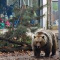 Kiderül, milyen időt jósol a meteorológus medve