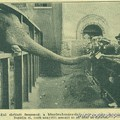 Ilyen egy inflációra érzékeny elefánt