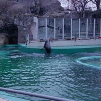 Hangversenyt adtak az állatkerti fókák