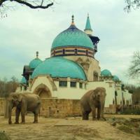 Egy minaret tövében, csillogó luxusban élnek az elefántok és a vizilovak