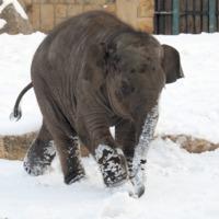 Tévhit, hogy télen nem érdekes az Állatkert