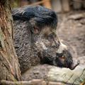 Melyik állaté a legtrendibb frizura az Állatkertben?
