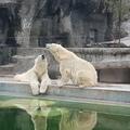 Nagyon fontos tanácskozás lesz az állatkertben