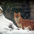 Varázslatos a téli állatkert