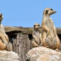 Ismét rendhagyó szülői értekezlet az Állatkertben