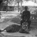 A 10 legérdekesebb sztori az Állatkert 154 éves történetéből